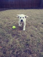 Lola-Gordon