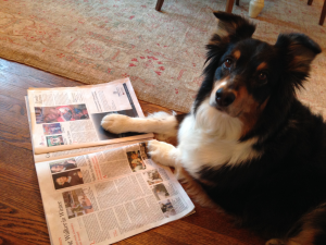 Brownie reading the Gazette